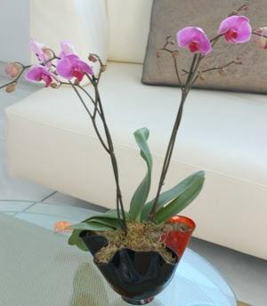 Bartın çiçekçi mağazası  tek dal ikili orkide saksi çiçegi