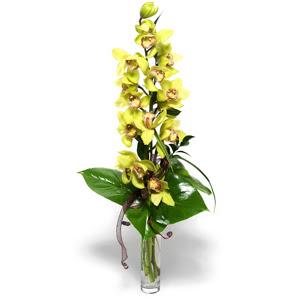 Bartın İnternetten çiçek siparişi  cam vazo içerisinde tek dal canli orkide