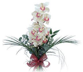 Bartın çiçek siparişi sitesi  Dal orkide ithal iyi kalite