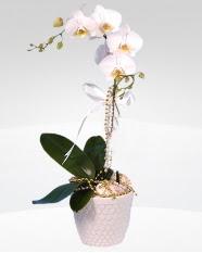 1 dallı orkide saksı çiçeği  Bartın online çiçekçi , çiçek siparişi