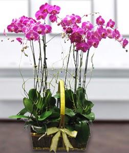 4 dallı mor orkide  Bartın güvenli kaliteli hızlı çiçek