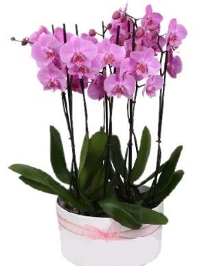 Beyaz seramik içerisinde 7 dallı mor orkide  Bartın çiçekçi telefonları