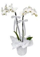 2 dallı beyaz orkide  Bartın güvenli kaliteli hızlı çiçek