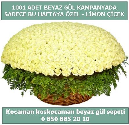 1001 adet beyaz gül sepeti özel kampanyada  Bartın çiçek gönderme sitemiz güvenlidir