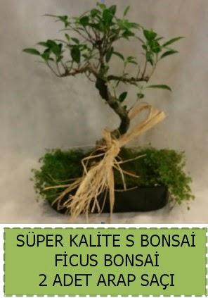 Ficus S Bonsai ve arap saçı  Bartın çiçekçi telefonları