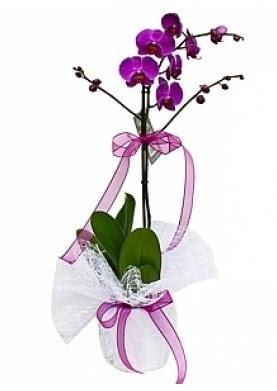 Tekli Mor Orkide  Bartın çiçek yolla