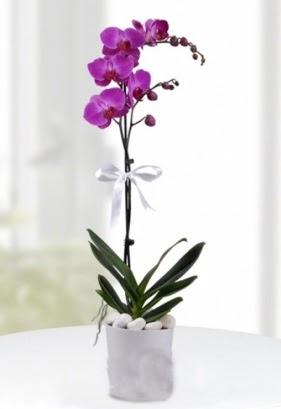 Tek dallı saksıda mor orkide çiçeği  Bartın çiçekçiler