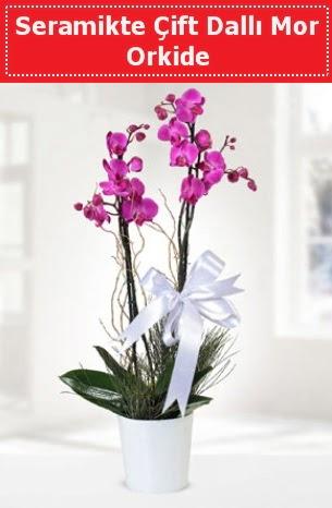 Seramikte Çift Dallı Mor Orkide  Bartın anneler günü çiçek yolla