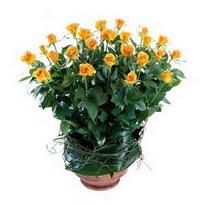 Bartın cicekciler , cicek siparisi  10 adet sari gül tanzim cam yada mika vazoda çiçek