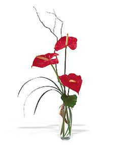 Bartın çiçek siparişi sitesi  cam yada mika Vazoda 3 adet  antoryum