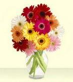 Bartın çiçek yolla , çiçek gönder , çiçekçi   cam yada mika vazoda 15 özel gerbera