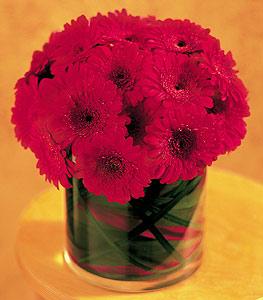 Bartın ucuz çiçek gönder  23 adet gerbera çiçegi sade ve sik cam içerisinde
