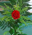 1 adet kirmizi gül buketi   Bartın çiçek siparişi vermek
