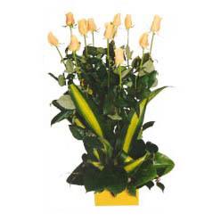 12 adet beyaz gül aranjmani  Bartın kaliteli taze ve ucuz çiçekler