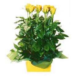 11 adet sari gül aranjmani  Bartın online çiçekçi , çiçek siparişi