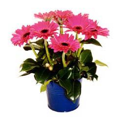 vazo içerisinde gerbera çiçekleri   Bartın online çiçek gönderme sipariş