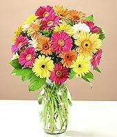 Bartın çiçek online çiçek siparişi  17 adet karisik gerbera