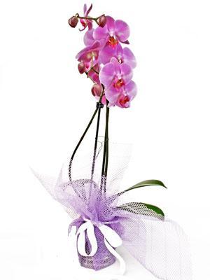 Bartın anneler günü çiçek yolla  Kaliteli ithal saksida orkide
