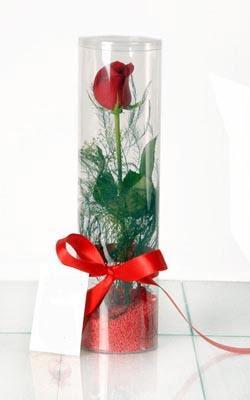 Bartın çiçek yolla  Silindir vazoda tek kirmizi gül