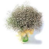 Bartın çiçek mağazası , çiçekçi adresleri  cam yada mika vazo içerisinde cipsofilya demeti
