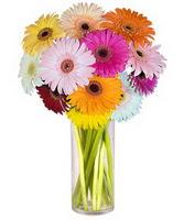 Bartın internetten çiçek siparişi  Farkli renklerde 15 adet gerbera çiçegi