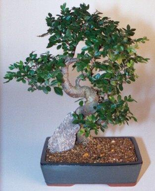 Bartın çiçek gönderme sitemiz güvenlidir  ithal bonsai saksi çiçegi  Bartın çiçek siparişi sitesi