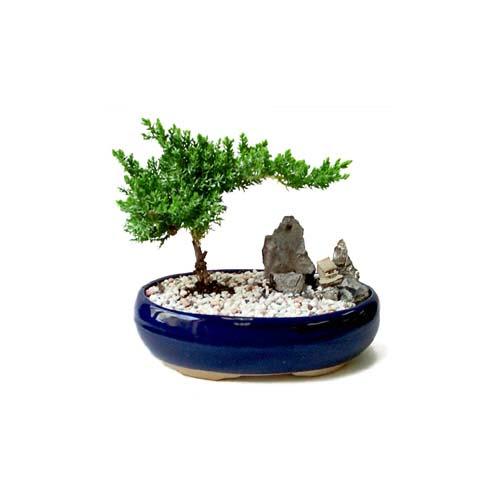 ithal bonsai saksi çiçegi  Bartın çiçek gönderme