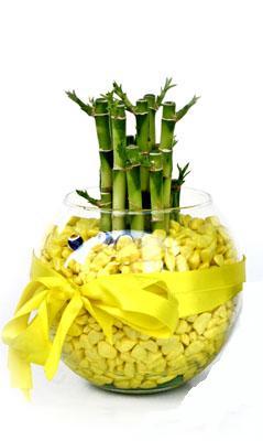 cam fanus içerisinde bambo  Bartın internetten çiçek satışı