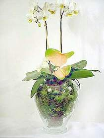 Bartın çiçek satışı  Cam yada mika vazoda özel orkideler