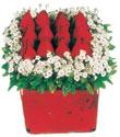 Bartın çiçek gönderme  Kare cam yada mika içinde kirmizi güller - anneler günü seçimi özel çiçek
