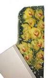 Bartın çiçek gönderme  Kutu içerisine dal cymbidium orkide