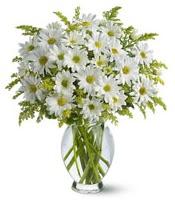 Vazo içerisinde beyaz krizantem çiçekleri  Bartın çiçekçi mağazası