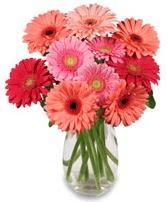 vazo içerisinde 13 adet gerbera çiçeği  Bartın çiçek siparişi sitesi