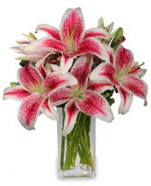 Vazo içerisinde 5 dal kazablanka çiçeği  Bartın cicekciler , cicek siparisi