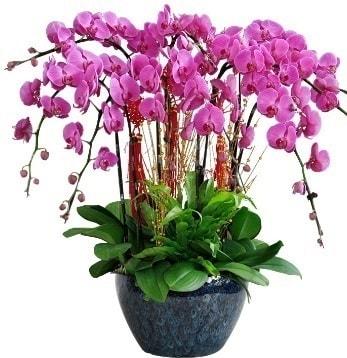 9 dallı mor orkide  Bartın 14 şubat sevgililer günü çiçek