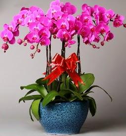 7 dallı mor orkide  Bartın çiçek online çiçek siparişi