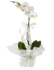 1 dal beyaz orkide çiçeği  Bartın çiçek siparişi vermek
