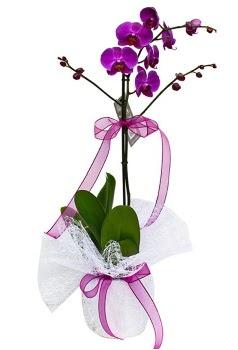 Tek dallı mor orkide  Bartın çiçekçi telefonları