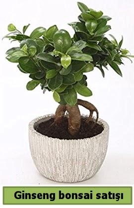 Ginseng bonsai japon ağacı satışı  Bartın çiçekçi telefonları