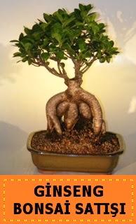 Ginseng bonsai satışı japon ağacı  Bartın cicek , cicekci