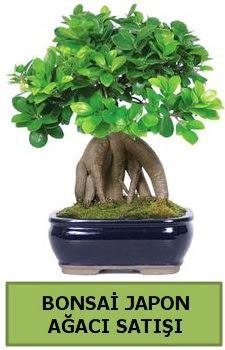 Bonsai japon ağacı satışı  Bartın çiçek satışı