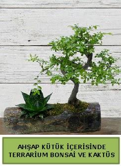 Ahşap kütük bonsai kaktüs teraryum  Bartın internetten çiçek siparişi
