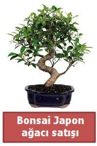 Japon ağacı bonsai satışı  Bartın çiçek siparişi sitesi
