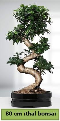 80 cm özel saksıda bonsai bitkisi  Bartın çiçekçi telefonları