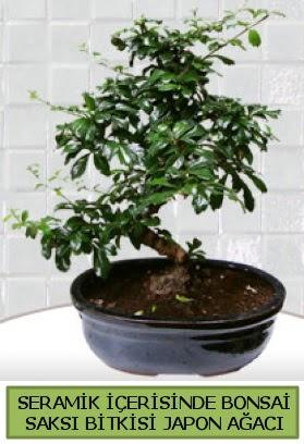 Seramik vazoda bonsai japon ağacı bitkisi  Bartın çiçek siparişi sitesi