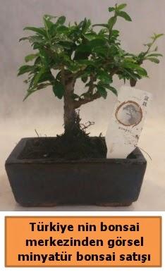 Japon ağacı bonsai satışı ithal görsel  Bartın çiçek yolla