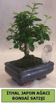 İthal japon ağacı bonsai bitkisi satışı  Bartın çiçekçi telefonları
