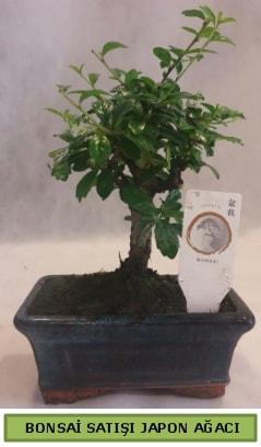 Minyatür bonsai ağacı satışı  Bartın çiçek gönderme