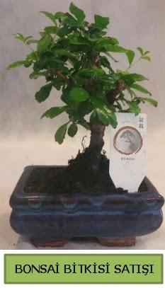 Bonsai ithal görsel minyatür japon ağacı  Bartın ucuz çiçek gönder
