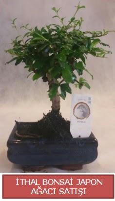 İthal küçük boy minyatür bonsai ağaç bitkisi  Bartın çiçekçi telefonları